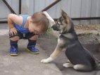 ძაღლი ადამიანის უერთგულესი და უსპეტაკესი მეგობარია.