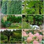 ბოტანიკური ბაღი