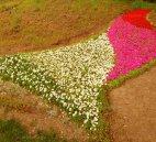 ყვავილნარი