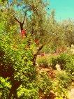 გეთსიმანიის ბაღი