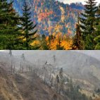 ბორჯომის ტყე ადრე და ეხლა