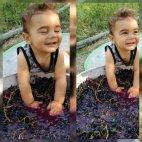 კახელი პატარა კაცი წურავს ყურძენს