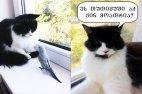 უკმაყოფილო კატა