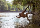 მაიმუნი წვერწამახული ხის შუბით ცდილობს თევზის დაჭერას