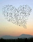 ფრინველებით შექმნილი გული