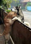 უსაზღვრო ძაღლური სიყვარული