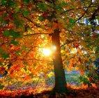 შემოდგომის მზე