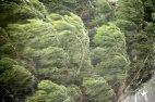 უზარმაზარი ხე ქარიან ამინდში .... მშვენიერია