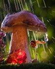 ცნობისმოყვარე ლოკოკინას წვიმის წვეთი მოეწონა