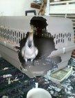 თავისუფლება თუთიყუშებს