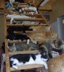 ვის გიყვართ კატები?