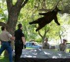 მფრინავი დათვი