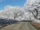 """სიღნაღი, ე.წ. """"დაცული ტყე"""" ზამთარში"""