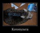 კატა-პულტი