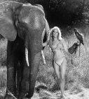 """ტანია რობერტსი-""""შინა-ჯუნგლების დედოფალი""""(1984 წელი)"""