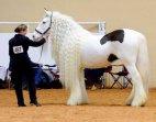რა ლამაზი ცხენია