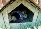 ორი საათი ვეძებდით მთელ სოფელში,ეს კი აქ,თავის ძმაკაცთან ყოფილა