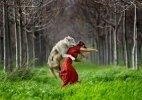 მგელია თუ ძაღლი?