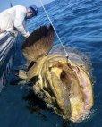 ამხელა თევზის ამოტანა არ გინდა იახტაზე, აი მესმის ნადავლი მეთევზისათვის
