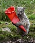გონიერი პოლარული დათვი