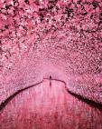 ალუბლის ყვავილის გვირაბი იაპონიაში
