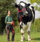 ყველაზე დიდი ძროხა მსოფლიოში