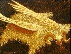 კოლხური ცოდნის სიმბოლო - ოქროს საწმისი