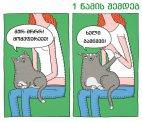 რა უნდა კატას, თვითონაც არ იცის