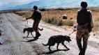 საბჭოთა სამხედროები ძაღლებით ატარებენ პაკისტანის საზღვართან პატრულირებას
