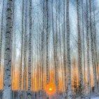 ზამთრის მზე