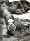 """მოკლული ჯო მასერია (""""ბოსი ჯო"""") თითებში ყვავის კიკოთი"""