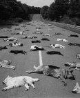 1980 წ. რატომ  იქნა მოკლული  პატრონების მიერ  140 ძაღლი