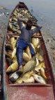 იღბლიანი თევზაობა