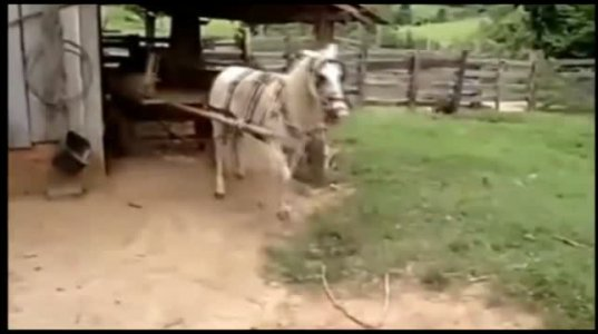 უჭკვიანეს ცხენს სადგომში კარგი მძღოლივით შეჰყავს მისაბმელი ორთვალა.