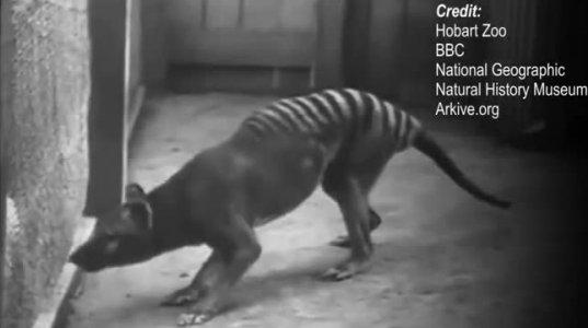 იშვიათი კადრები:ზოგიერთი  გადაშენებული ცხოველთა სახეობა