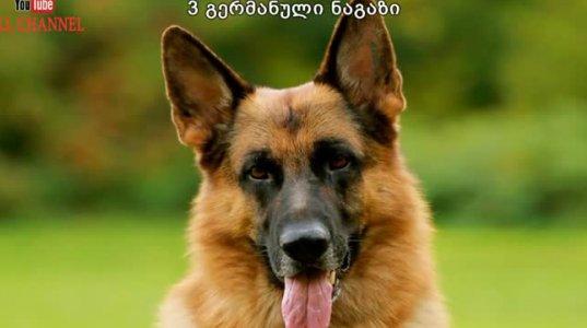 5 ყველაზე საშიში ძაღლი