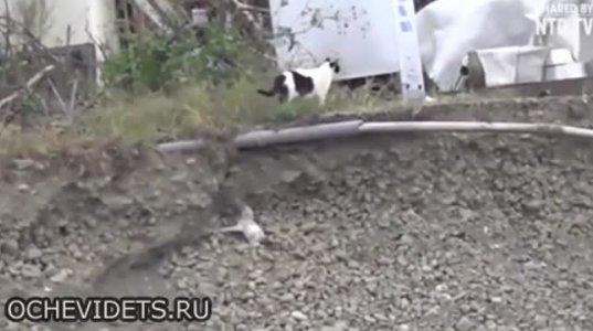კატამ ლეკვი დაღუპვას გადაარჩინა