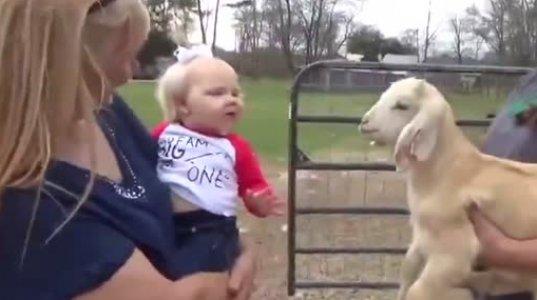პატარა თხა და ბავშვი კამათობენ,ძალიან პოზიტიური ვიდეო