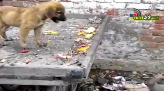სასაცილო მაიმუნი აწუხებს ძაღლს