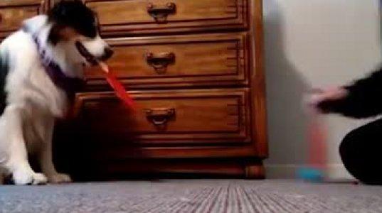 მხატვარი და მუსიკოსი ძაღლი