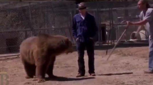 6 ცხოველი, რომლებმაც ტრენერის სიცოცხლე შეიწირა