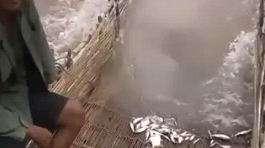 თევზის დაჭერის უჩვეულო მეთოდი - ასეთი რამ ნანახი არ გექნებათ