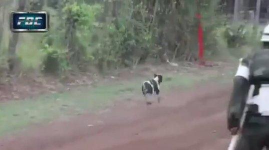ამ ძაღლს ნამდვილად 9 სიცოცხლე აქვს ნახეთ რა სასწაულებრივად გადაურჩა სიკვდილს
