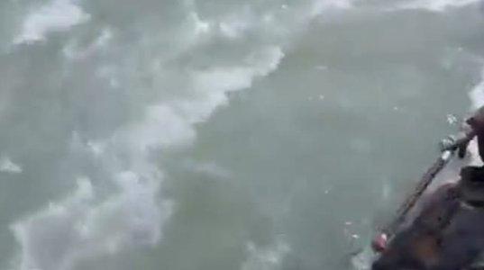 როცა ბრაკონიერი აილაგმება ასე გამრავლდება თევზი მდინარეებში