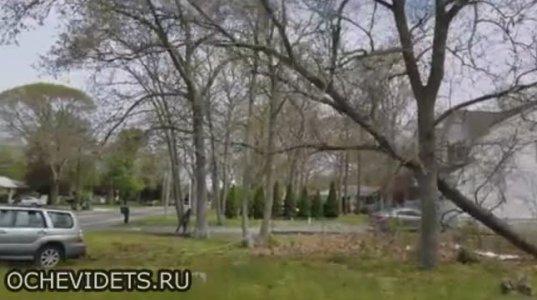 ასეთი მეზობელი გაშოროთ ღმერთმა ანუ როგორ არ უნდა მოჭრათ ხე