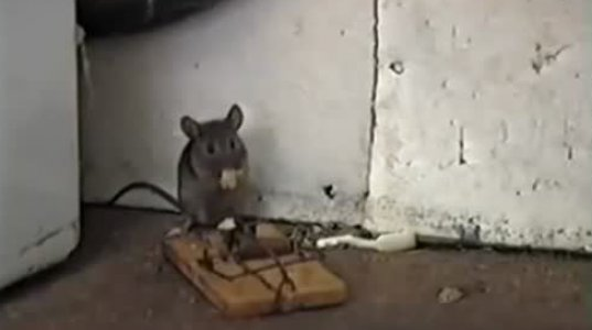"""ეს რა იყო ანუ მოხერხებულმა თაგვმა სათაგურს """"გაუჩალიჩა"""""""