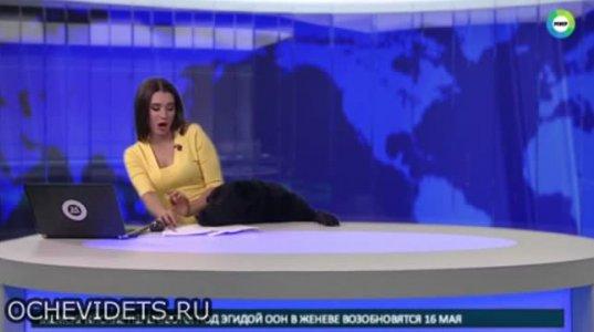 ტელეწამყვანი ქალი მაგიდის ქვემოდან გამოსულმა ძაღლმა დააფრთხო
