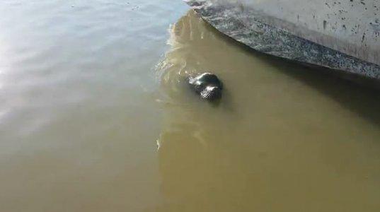 კანადაში ზღვის ლომმა გოგონა ზღვაში შეათრია