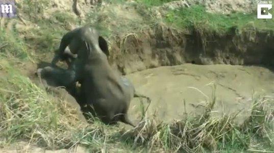 სპილო ორი დღე გაჭედილი იყო გუბეში