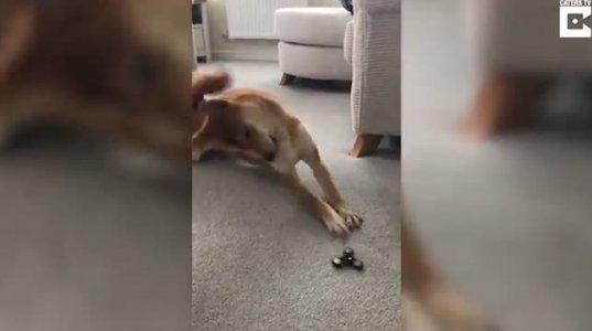ძაღლის რეაქცია ნახეთ სათამაშოზე